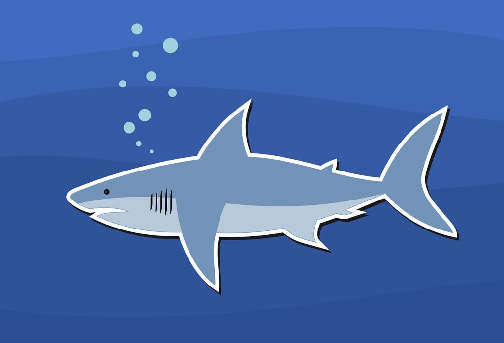 A shark illustration